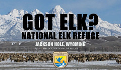 GOT ELK? (USFWS Mountain Prairie) Tags: yellowstone elk tetons jacksonhole usfws wildliferefuge fws jacksonwyoming elkrefuge nationalelkrefuge usfishwildlifeservice nationalwildliferefugesystem greateryellowstone nwrs