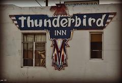 Thunderbird (pam's pics-) Tags: new signs newmexico sign vintage mexico hotel route66 neon lodging motel nm northern motorinn motherroad motorlodge motorcourt thunderbirdinn northernnewmexico pammorris pamspics cerrillosroad april2012roadtrip