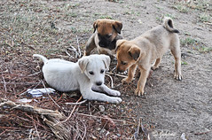 Come, let us celebrate Earth Day! - EXPLORE (Jehane*) Tags: india nature pups nikon celebration earthday jehane happyearthday 2013 kedgaon nikond5000 jehanephotography wishingyouahappyearthday kedgaonpune earthdayapril222013