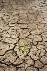The Earth Needs Water (milolina) Tags: me2youphotographylevel1