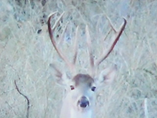 Texas Free Range Whitetail Hunt - Cotulla 13