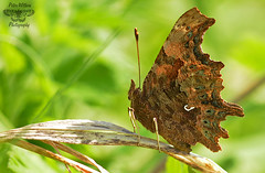Comma (Pete Withers) Tags:
