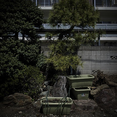 Industrialized Garden with Concrete Wall (jacob schere [in the 03 strategically planning]) Tags: urban plant tree rock japan wall pinetree pine digital garden square concrete tokyo rocks industrial apartment gardening jacob 4 cement communication container plastic pot gr local lucid cinderblock iv ricoh potted edogawa kasai m2c industrialized schere  dgr jacobschere lucidcommunication