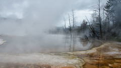 Somber (dbushue) Tags: nature landscape nikon terrace steam yellowstonenationalpark wyoming thermal hotsprings 2012 ynp mammothhotsprings coth upperterrace geyserbasin supershot absolutelystunningscapes damniwishidtakenthat coth5 dailynaturetnc13