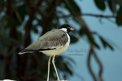 (Naser__salem) Tags: sea fish bird birds land kuwait  q8            q8photo   uploaded:by=flickrmobile flickriosapp:filter=nofilter naseralhamed