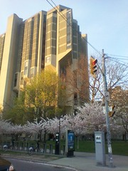 The cherry blossoms of Robarts Library (3) (randyfmcdonald) Tags: toronto spring universityoftoronto cherryblossoms robartslibrary