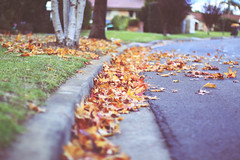 Leaves (Andreeyah) Tags: street autumn tree up grass leaves 50mm branch colours close bokeh sydney roots australia ground fallen colourful curb