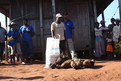 September 2013 - Madagascar blog and stock photos (EU Civil Protection and Humanitarian Aid) Tags: warning children early education rice innovation winds madagascar cyclone floods tuber resilience fragility igname disasterriskreduction
