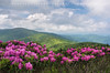 Appalachian Trail Roan Highlands (Mark VanDyke Photography) Tags: roanhighlands roanmountain roan roanhighbluff roundbald enginegap janebald appalachianmountains appalachia southernappalachianmountains mountains northcarolina nc westernnorthcarolina wnc tennessee tn cartercounty green trail appalachiantrail appalachiannationalscenictrail rhododendron rhodies pink magenta bloom blossom spring seasonal june clouds bigskies highlandmeadow outdoors outside landscape photography