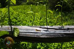 LRa05-24-16g-1758 (Glotzsee) Tags: nature blueridgeparkway blueridgemountains blueridge virginia scenery