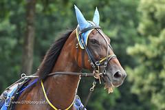 070fotograaf_20160728_061.jpg (070fotograaf, evenementen fotograaf) Tags: harnessracing racing draverij drafsport paardensport paardesport harness paardenmarkt holland netherlands nederland 070fotograaf kortebaandraverij voorschoten 2016 paarden draven kortebaan