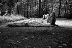 Vier einsame Gräber im tiefen Wald. (Lichtabfall) Tags: forest einfarbig trees bäume monochrome blackwhite blackandwhite schwarzweiss wald graves gräber grabsteine gravestones 4 vier four