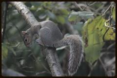 close call (KeithJustKeith) Tags: wildlife garden tree keithjustkeith keithjustkeith2016 2016 salford greater manchester outdoor animal canon 100d eos