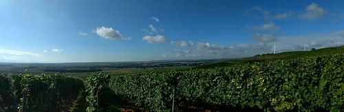 In den Weinbergen bei Selzen