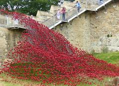 Poppy wave Explore (Jane.Des) Tags: ceramic poppies 5000 blooms lest we forget lincoln castle