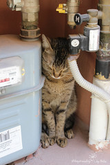 IMG_5673 (by_Stella) Tags: ninelives straycat streetcat meow kitty cat athens greece travelling traveling travel keeptravelling enjoy summer hot hotsummer sand windy warm burn city culture acropolis temples backpacking citylife athenian life hobby streets