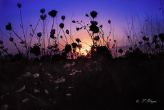 Atardecer con Tanit .(Mallorca)---Sunset with Tanit. Para Helena de Riquer . (frankolayag) Tags: atardeceres naturaleza mallorca sasorda espaa colores tanit dioses frankolaya islasbaleares arte pentax airelibre ocaso cielos azul magenta naranja siluetas pentaxart