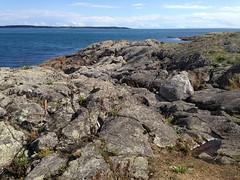 2016 09 19 Cattle Point_0031 (Blake Handley) Tags: blake blamar cattlepoint oakbay victoria bc britishcolumbia vancouverisland canada dogs ocean shoreline beardedcollie beardie