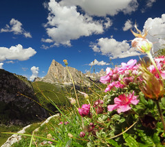 Simplicity (Robyn Hooz) Tags: montagne fiori flowers nuvole clouds erba grass weed mountains rocks rocce giau cortina italy