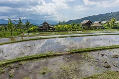 _DSC3957_Bali_09_16 (Saverio_Domanico) Tags: bali indonsie munduk voyage