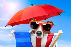 dog sunbathing (Enea Marius videos producer) Tags: animal baby backlighting beach beautiful blue chair color colorful comedy cute deckchair dog doggy flare flip flipflop flop footwear funny glasses heat holiday hot humor jackrussellterrier lazy leisure lounger parasol pet puppy red relax rest russell sandal shade shades shoe summer summertime sun sunbathing sunglasses sunny sunshine terrier tourist towel travel tropical umbrella vacation whitebackground