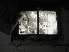 Behold Vision~ (K.Chris ~AlwaYs LeaRning~) Tags: wall blackandwhite structure architecture monochrome abandoned decay window light shadow vines growth nature dark black white grey brick