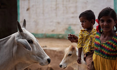 Jaisalmer, India 2016 (MeriMena) Tags: travel cultures faces canon450d kids merimena rajasthan colors asia canon india jaisalmer cow portrates
