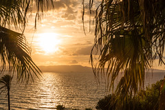 Ionic Palm Sunset (Landstre1cher) Tags: sun warmlight sunset water sky greece ionsea palmtrees sea clouds