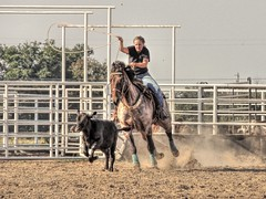 Twirl the Loop (clarkcg photography) Tags: roping rope calf calves horses horse leather tack arena control rodeo practice