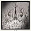 Hipsta sea forest III (Caroline Oades) Tags: england westsussex eastwittering coast wormcasts trees sand bw wavelet ocean wave forest sea seaside beach redeyegel blackeysbw salvador84 theappwhisperer iphone5s hipstamatic sandart