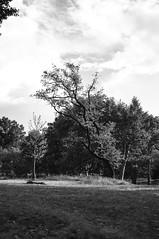 X100-09-12-15-421-2 (a.cadore) Tags: fujifilmx100 fujifilm x100 nosort 23mm35mmequivalent newyorkcity nyc uptown uws blackandwhite bw landscape