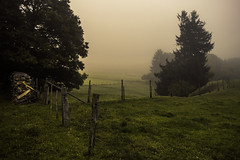Happy Fence Friday (Netsrak) Tags: meadow wiese gras grass tree trees baum bume wald forst forest woods outdoor landscape landschaft mist fog nebel haze dunst zaun fence hff nature natur rheinbach nordrheinwestfalen deutschland de