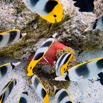 fishes in the coral garden thumbnail