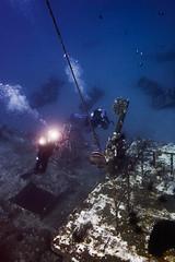 FLA-161001-ND800-8175 (ferlopez) Tags: batfish fish longfinbatfish marinelife plataxteira spadefish underwaterphotography wailea mauihawaii usa