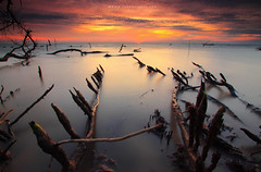 Elements of Nature (Explored) (Fakrul J) Tags: ocean longexposure trees sunset sky cloud seascape beach nature clouds canon landscape photography landscapes amazing raw skies seascapes view dusk shoreline scenic explore mangrove shore fallen elements malaysia stick dreamy guardian fallentree selangor guardians deadtrees beautifulsunset banting morib flickrexplore singleshot explored nohuman kelanang eos500d pantaikelanang singhrayfilter leefitlers darylbensonreversegrad fakruljamil wwwfakruljamilcom imagewithcolors leeproglass3stop