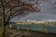 Happy Easter! (erika eve) Tags: spring rainbow cherryblossoms willamette