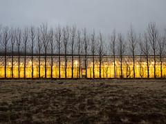 Grurmrk, Hverageri 2013 (Karl Gunnarsson) Tags: trees iceland spring dusk overcast greenhouse barren sland hothouse hverageri em5 panasonic20mmf17 grurmrk
