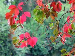 Autumn colors (Alonso Henrquez) Tags: chile autumn fall nature colors hojas leaf otoo canong3 colchagua cfb chilecentral colchaguavalley valledecolchagua alonsohenrquez simplysuperb