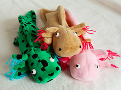 Axolomeh (janetsaw) Tags: bag toy stuffed soft bean plush collection axolotl perlsacktiere