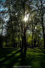 Trees of Green (Nicolas Pavlidis) Tags: light shadow sky people sun tree green nature fuji outdoor meadow rays naturephotography fujixe1 fujinonxf35