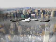 陌生世界 (Stranger in a strange land - VII) (Howard L.) Tags: seagulls canon miniature flying manhattan empirestatebuilding howd tiltshift powershots100 135mmf2 5dmiii howardlaudesign