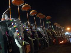 koodalmanikyam utsavam 2013 shiveli27 (koodalmanikyam-utsavam) Tags: elephant utsavam irinjalakuda koodalmanikyam irinjalakudautsavam shiveli koodalmanikyamtemple koodalmanikyamutsavam2013 koodalmanikyamutsavamphotos