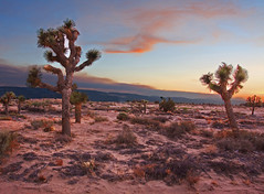 Mojave Desert at Dusk (Rennett Stowe) Tags: california sunset tree beauty america iso100 twilight desert dusk joshuatree biosphere lovely antelopevalley joshuatrees skyblue mojavedesert redsunset theamericanwest otherworldly redland theunitedstates thehighdesert reddesert californiasunset strangetrees americandesert ilovethedesert beautifuldesert surrealnature inlandcalifornia cannon40d desertecosystem californiahighdesert orangeandbluesky twilightimages thewesternunitedstates desertwallpaper desertatdusk joshuatreeimages freedesertpics surrealdesert photographsoftwilight mojavedesertwallpaper antelopevalleywallpaper freedesertwallpaper desertintheevening vacationintheus perfectdesert perfectsunsetphotos beautifuldesertphotographs mojavedesertatdusk californiaevening unspoiledwesternamerica hiddenamericansights shootingwitha16mmlense unusualdeserts perfectdesertpics diverseecosystem unknowndeserts beautifuldesertpics 16mmlense