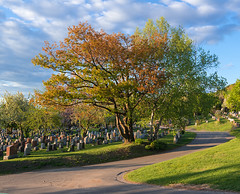 Cimetire Mont-Royal, Montral (monilague) Tags: road light sky cloud tree monument spring montral lumire montreal route funeral ciel gravestone blossoming nuage montroyal arbre moutain printemps cimetire funraire bloming montange floraison
