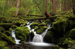 Sometimes there is a place...... (McCoy352) Tags: longexposure green water creek forest flow moss ancient joy thoughts pacificnorthwest grateful olympicnationalpark contemplation connections 15seconds verygreen greenalicious aplacethatilove pastlovedones