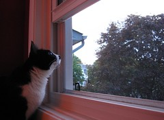 Where did Flickr go daddy? (WJB1961) Tags: cats pets cute squirrel ripley willow canonpowershot sooc bestofcats kittyschoice catmoments isomisstheoldflickr