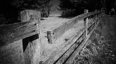 Popped Out For a Bit (orbed) Tags: fence monotone hff sigma24mmf28superwideii sonya99