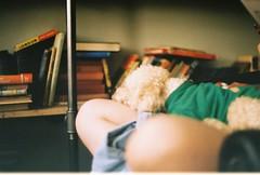 Coconut (HelenaC9) Tags: pets dog cafe indoors film analogue books 35mm vintage poodle praktica mtl5