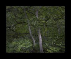 Dark Leaf Matter 140616/03 (Gibbom) Tags: darkleafmatter energy forest woodland trees burnhambeeches distagont235 distagon352ze nature natural leafy mystery trunks green summer