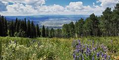 (LuminousWest) Tags: sigma dp dp0 dp0q quattro sigmaquattro foveon landscape mountain dp0q2492 luminouswest luminous west x3f colorado wildflowers
